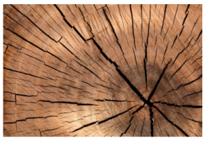 Is Wood the Next Disruptor?